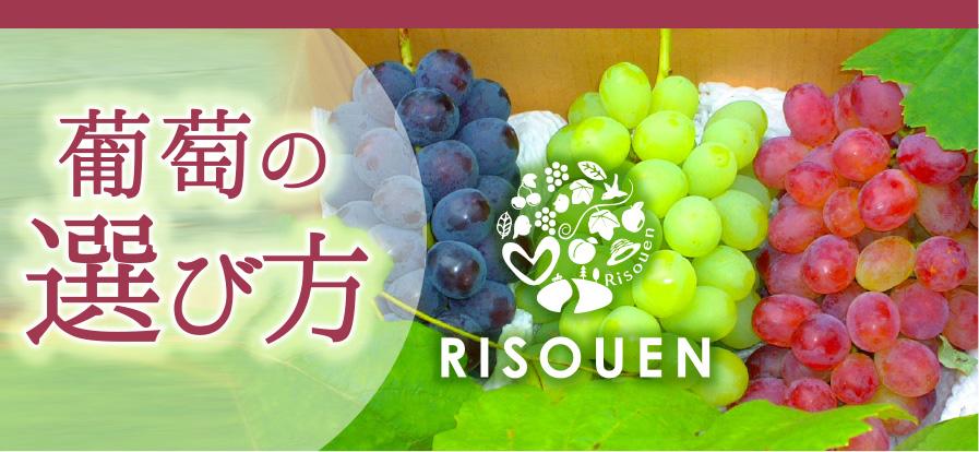 理想園の葡萄の選び方