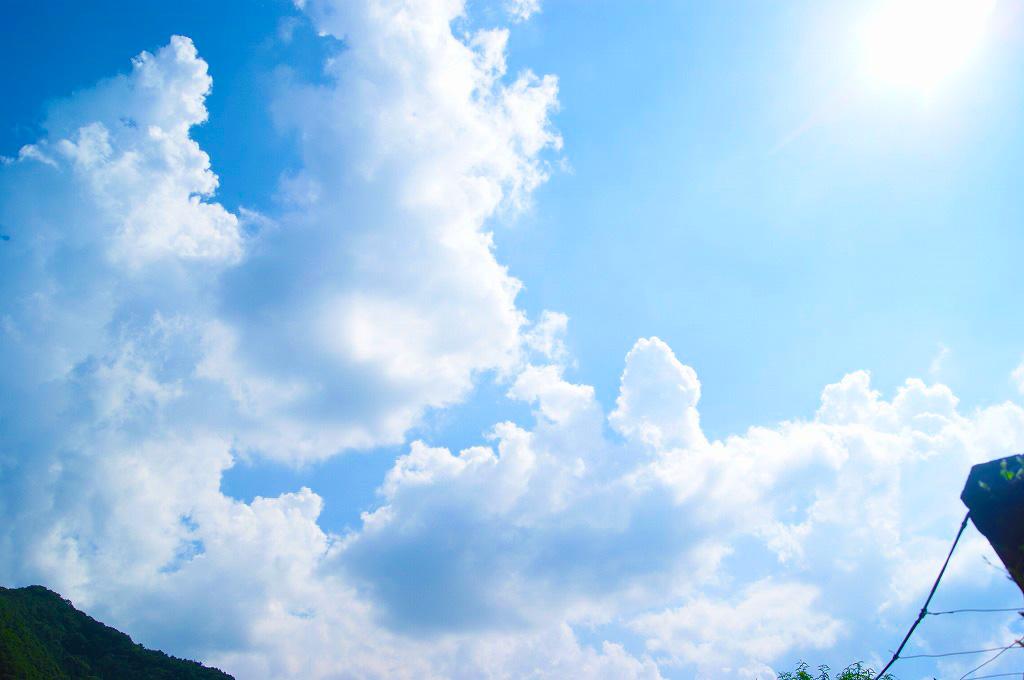 山梨・勝沼・理想園:8月中旬、夏から秋へ。ぶどう畑の風景