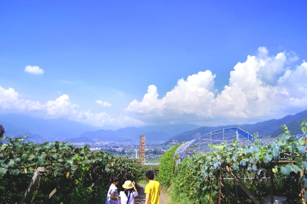 山梨・勝沼・理想園:8月中旬、夏から秋へぶどう畑の風景