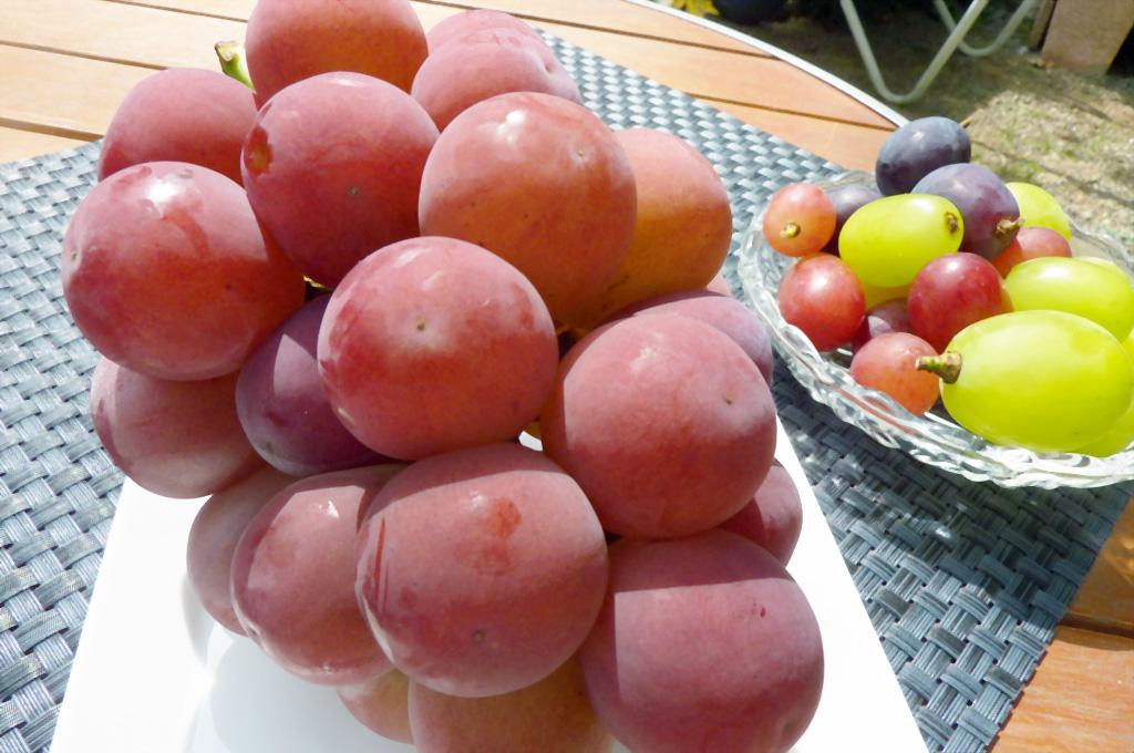 一粒が大きいもので約20g以上となるゴルビーは 数ある葡萄の中でもトップクラス。大粒でとても甘くジューシー。
