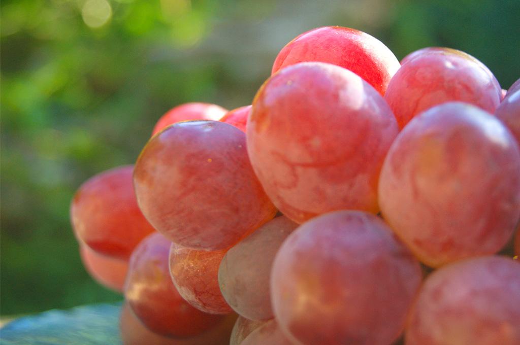 甲斐路は鮮やかな紅色、華やかなマスカットの香りをもつ品の良さから 「葡萄の女王」とも呼ばれています。