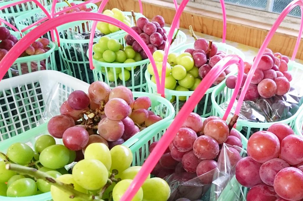 売店の様子。夏から秋にかけてい色とりどりの葡萄が並ぶ。