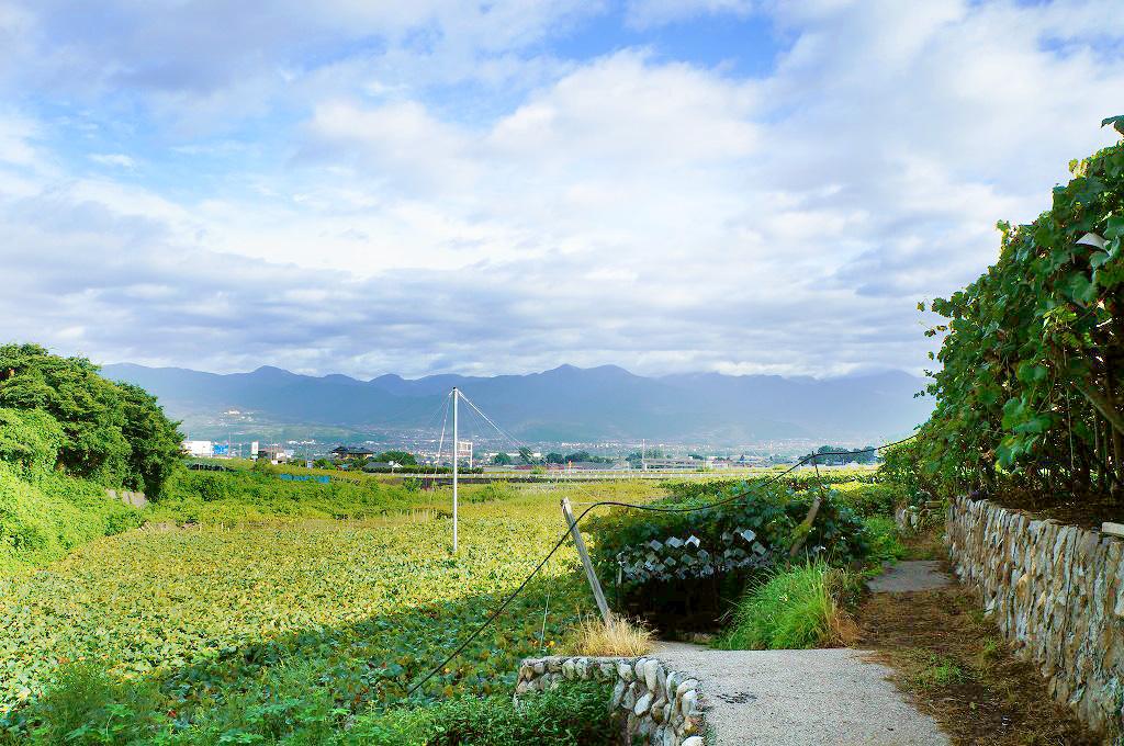 山梨・勝沼・理想園:秋のぶどう畑風景