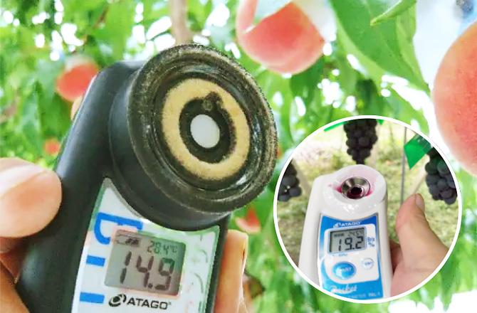 桃には「光糖度センサー」を採用、葡萄は糖度計を利用し糖度をチェックを行っています。