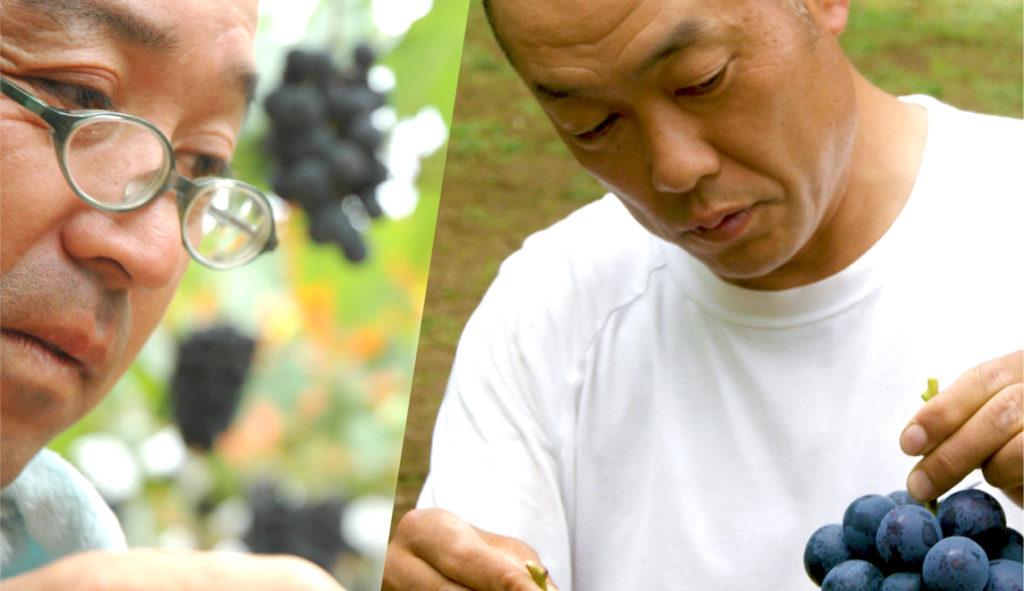 葡萄の匠たち
