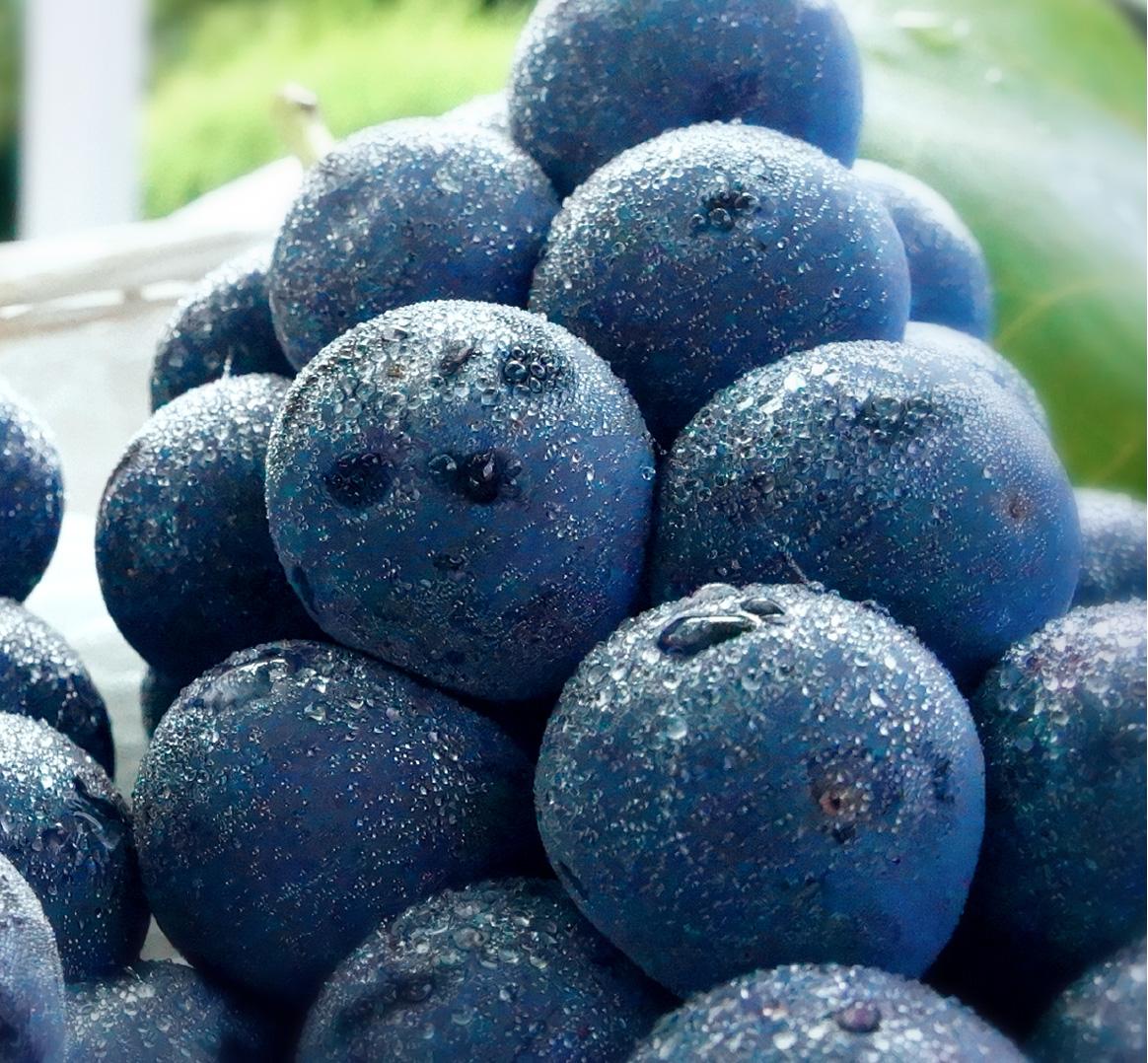理想園の高級葡萄「ピオーネ」