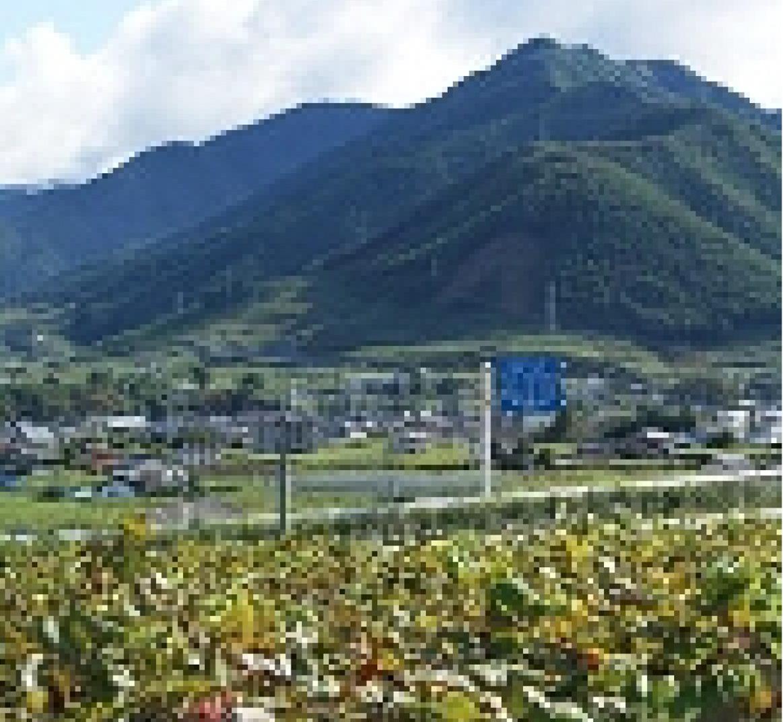 理想園の高級葡萄「ピオーネ」が育つ環境