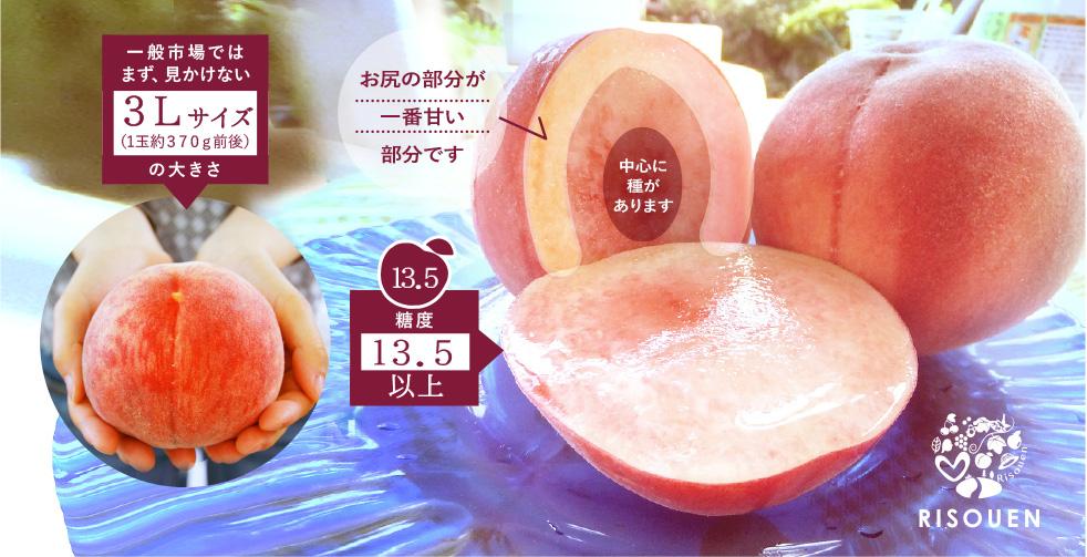 理想園の「プレミアム白桃」美味しい部分と大きさ